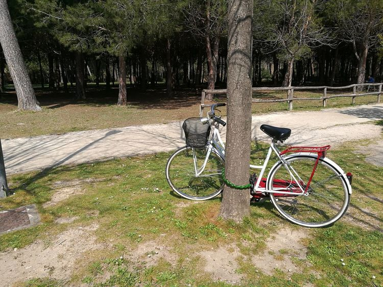 Beauty In Nature Bicycle Cycling Day Grass Land Vehicle Mode Of Transport Nature No People Outdoors Stationary Tree Tree Trunk