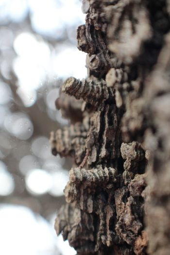 Tree Bark... Canon Different Perspective StillLifePhotography Virginia Canonphotography Woods Close-up Selective Focus Nature Outdoors Backgrounds No People Tree Bark Macro_collection Macro Beauty