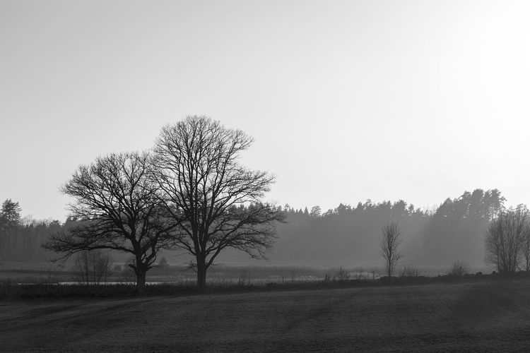 Bare tree on field against sky Day Copy Space No People Isolated Growth Bare Tree Land Environment Tranquility Plant Sunrise - Dawn Dusk Beauty In Nature Tranquil Scene Non-urban Scene Evening Morning Fog Forest Scenics - Nature Foggy Day Silhouette Sky Field Meadow Scenics Season  Outdoors Landscape Rural Scene Nature Tree Balack And White Monochrome