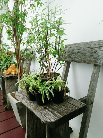 Plant Growth Nature Table Indoors  No People Tree Beauty In Nature Day