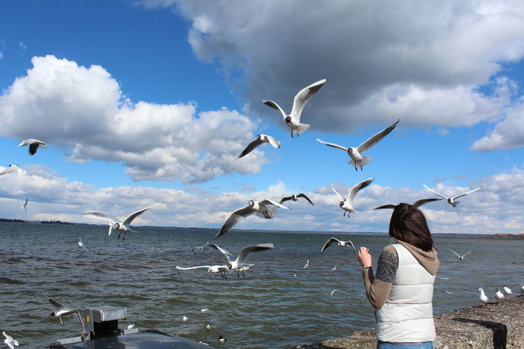 girl feeding seagulls, chiemsee view Animals In The Wild Animal Wildlife Animal Themes Flying Bird Animal Vertebrate Group Of Animals Water Cloud - Sky Sky Sea Spread Wings Seagull Nature Day Large Group Of Animals Real People Mid-air Horizon Over Water Outdoors Flock Of Birds