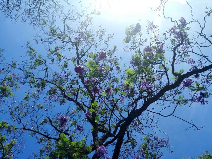 Nature Tree Low