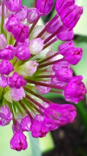 Macro Purple Flower Just Bloomimg