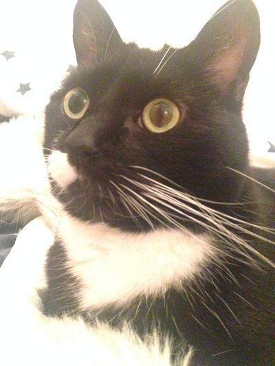 Cat Furmagoo No Filter