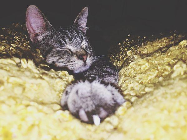 Moonflower Kitty Dazed Lover