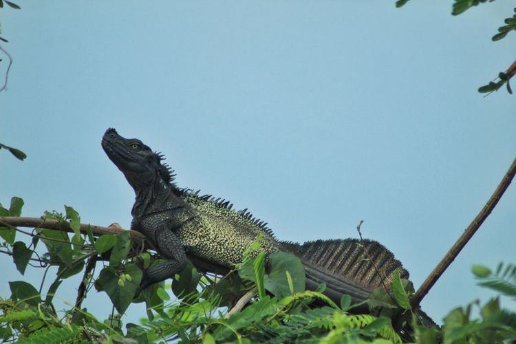 Low angle view of lizard against clear sky