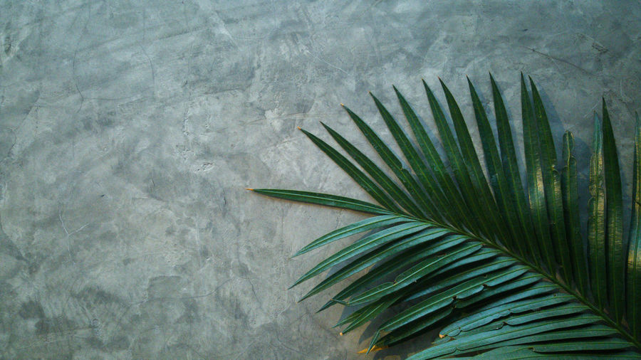 The palm leaf on a concrete wall. modern cement wall with partially covered tree leaves.