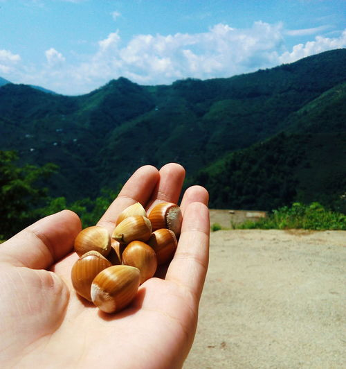 Cropped hand of person holding hazelnuts