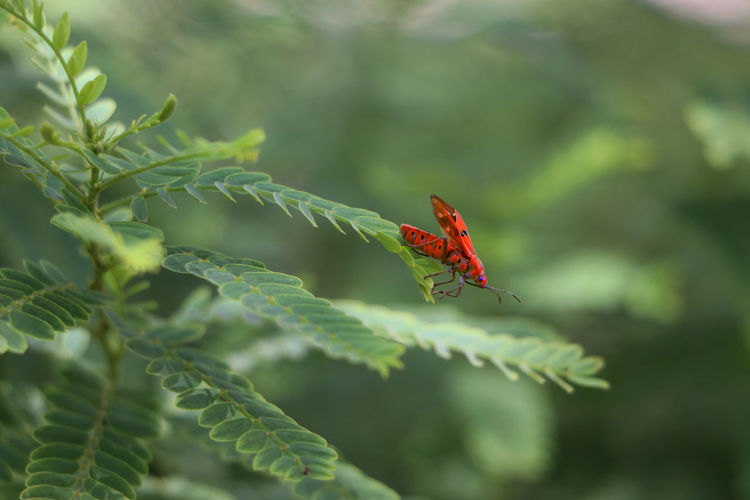 Insect Plant