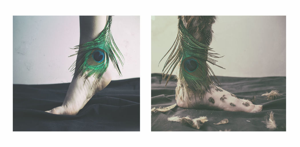 Digital composite image of a horse