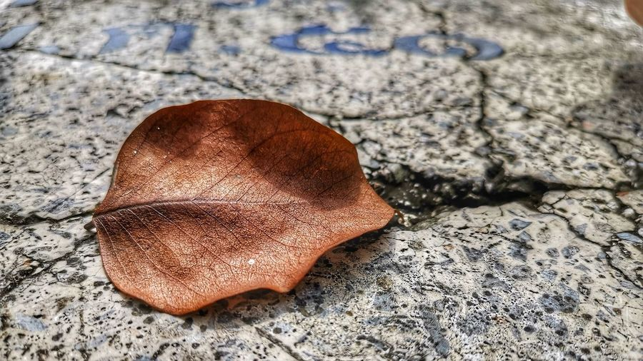Time goes very fast Leaves Brown Old Marble Rock Breaking Dry Llifestyle Sand Beach Textured  Close-up Dried Plant Stone First Eyeem Photo