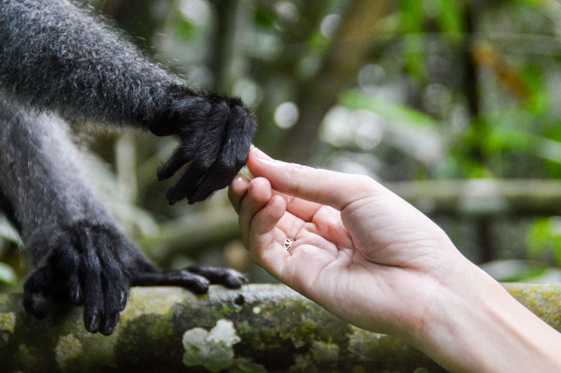 Close-up of human hand feedingna monkey