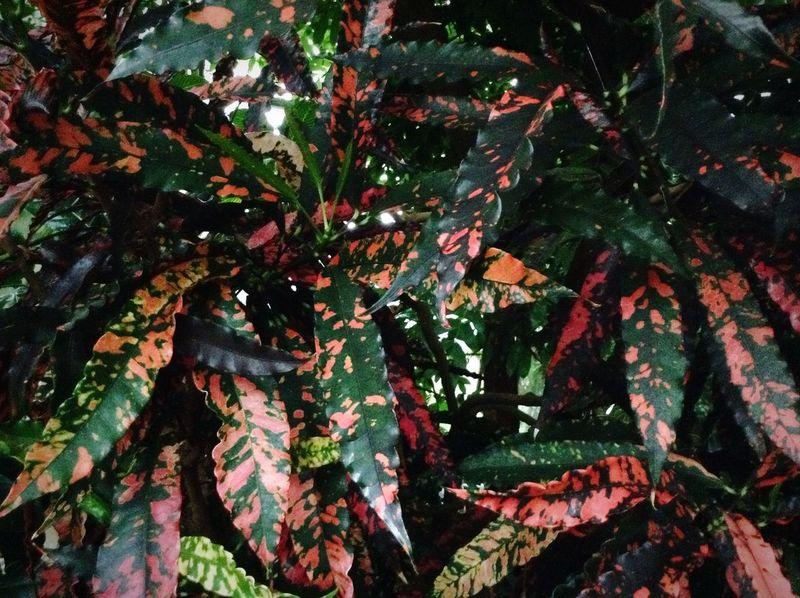 Colourful leaves. Royal Botanic Gardens Botanical Gardens Garden Plants Green Colors Colours Walking Around Leaves