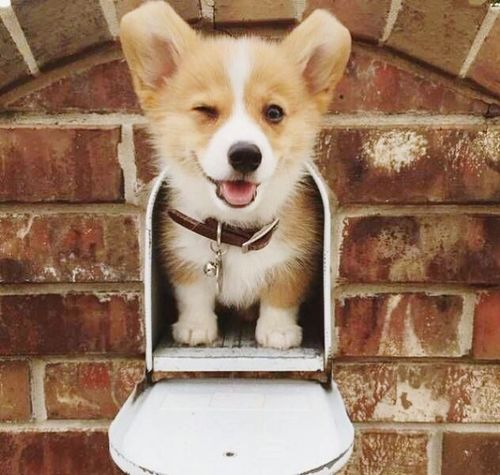 Animal Themes One Animal Domestic Animals Pets Dog Brick Wall Architecture Built Structure Mammal Building Exterior Looking At Camera Outdoors Day Focus On Foreground No People Zoology