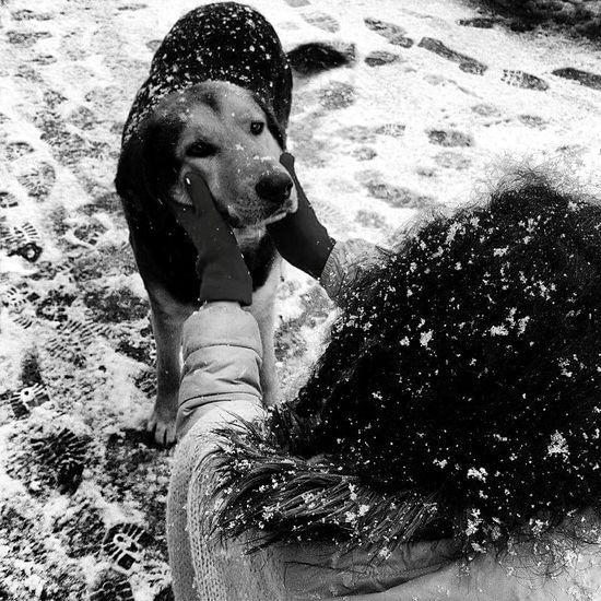 Blackandwhite Blackandwhite Photography Enjoying Life Woman Portrait Woman ıstanbul Streetphoto_bw Streetphotography Turkey Sarıyer Snowing Dog Friend