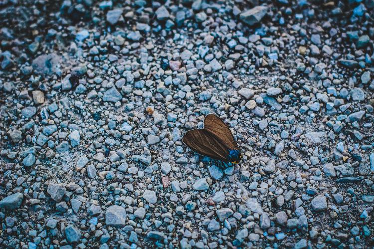 High angle view of moth on pebbles