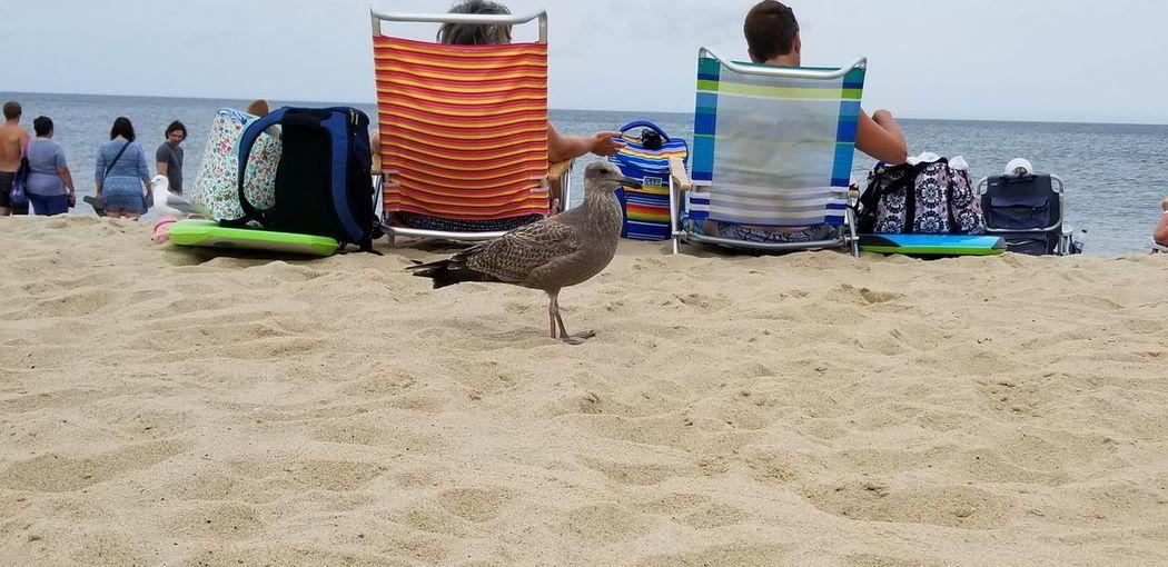 Panoramic shot of seagulls on beach