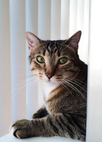 My Eshii EyeEm Animal Lover I Love My Cat Cuteness Meow