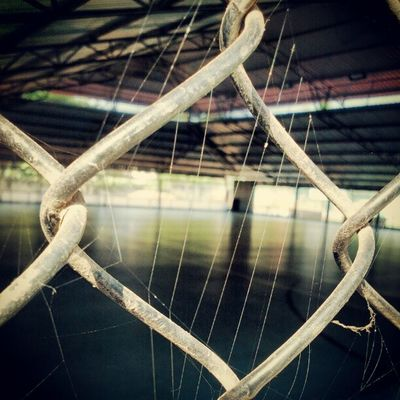 Its amazing how animals adapt the changes we do to their environment Spider Web Irix2012 Dmodar