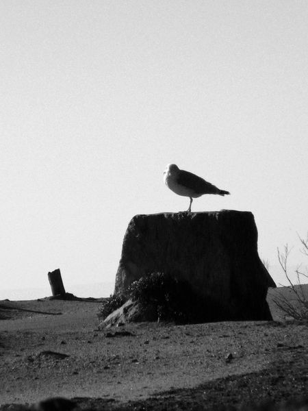 One Seagull Waiting Alone Loneliness Bnw On A Trunk or On A Rock Loneliness On An Island Black And White - Bird Sea Spray Ocean Theme EyeEm Best Shots - Black + White