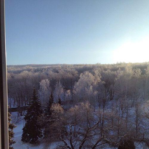Вид из номера☺️Russia Winter Beautiful Amasing Snow Instasize Magic Forest Sky VolgaCliffResort Россия зима волжскийутес снег Лес
