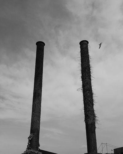 Industry Bird