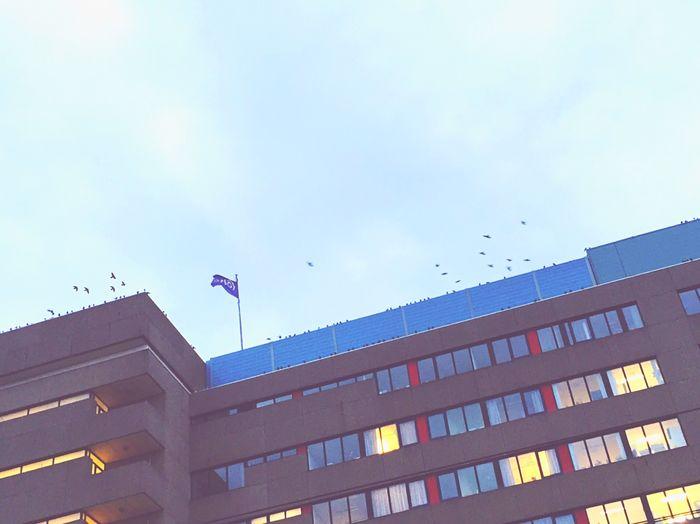 Birds @ Hospital