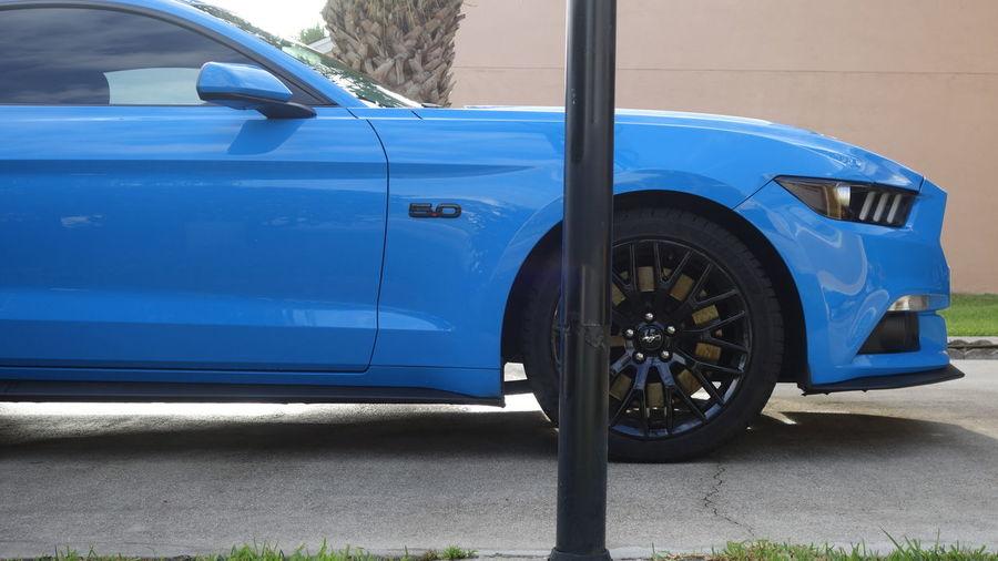 Blue Mustang In