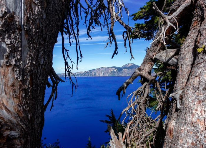 Looking through the trees at Crater Lake National Park in Oregon Outdoors Branch Sunlight Blue Sky Tranquil Scene No People Day Trunk Tree Trunk Scenics - Nature Tranquility Beauty In Nature Water Nature Plant Tree Oregon Travel Destinations Crater Lake National Park Beautiful Scenic Crater Lake National Park Pacific Northwest  USA America Travel Scenics View Natural Attraction Attraction Summer Blue Sky Colorful Landscape Landmark Unique Perspectives Volcano Caldera Waterfall Lakeside