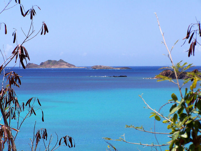 View through the bushes of a turquoise ocean in the Caribbeans St-Thomas US Virgin Islands