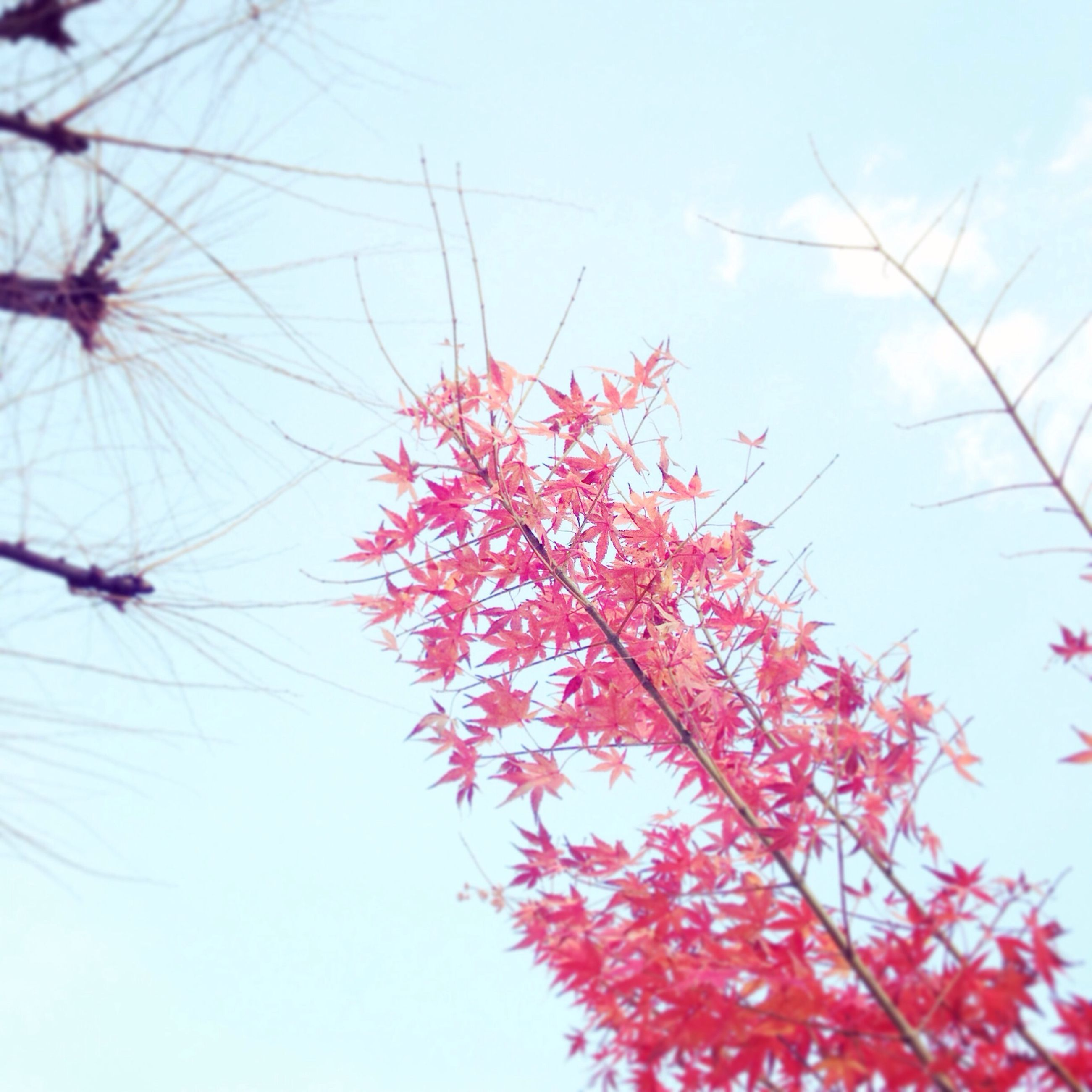 low angle view, branch, red, growth, clear sky, nature, tree, sky, beauty in nature, flower, freshness, day, leaf, fragility, outdoors, no people, season, autumn, tranquility, twig