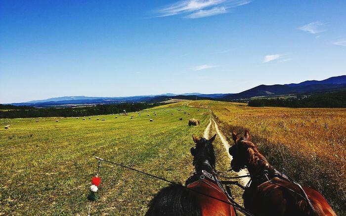 Hungary Culture Budapest_hungary Budapest_is_awesome Magyarország Beautiful ♥ Horses Horse Life Horse Love Horse Riding H
