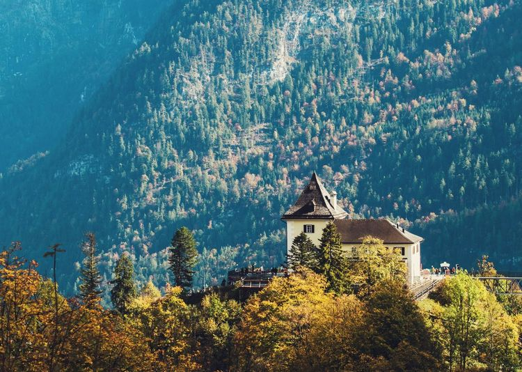 Austria Fall Colors Nature Nature Photography Autumn Beauty In Nature Building Exterior Forest Hallstatt Mountain Nature Nature_collection Nature_perfection Naturelovers No People Outdoors Scenics Season  Tranquil Scene Tranquility Tree