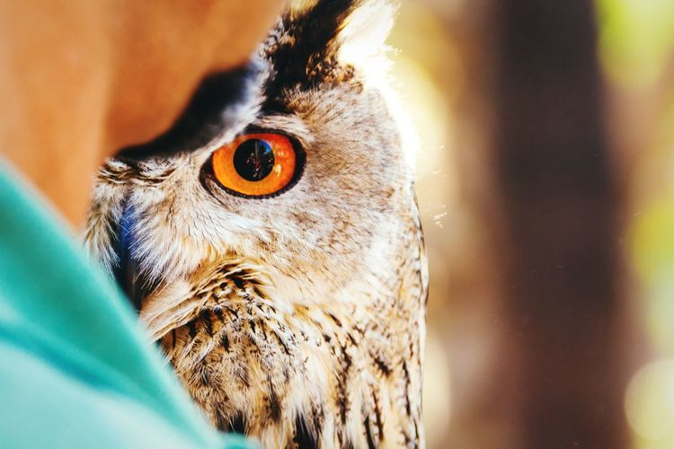 Animal Portrait Owl Bird Photography EyeEm Nature Lover Animals Owl Eyes Birds Of Prey Open Edit