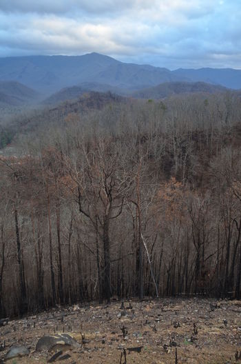 Beauty In Nature Burned Day Forest Fire Gatlinburg Tennessee Landscape Mountain Nature No People Outdoors Scenics Sky Tranquil Scene Tree