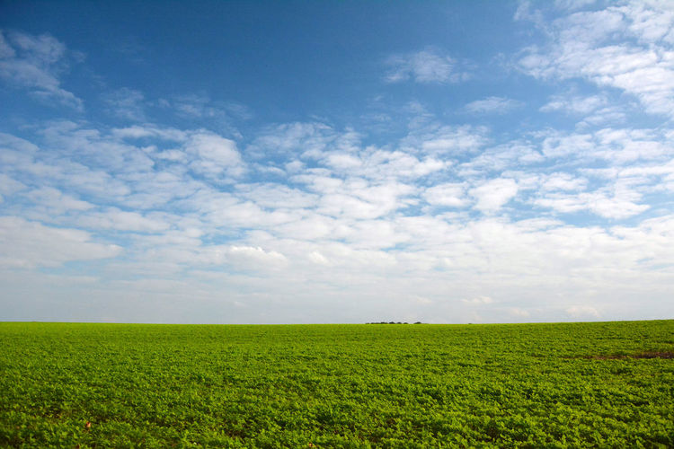 Landscape Cloud - Sky Environment Sky Field Tranquil Scene Tranquility Land Beauty In Nature Scenics - Nature Rural Scene Horizon Over Land Plant Horizon Agriculture Nature Green Color Day No People Growth Outdoors