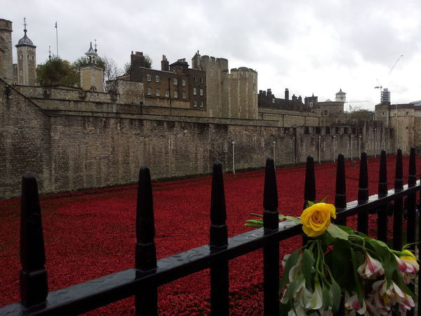 100th Anniversary Architecture Blood Building Exterior Built Structure Day Flower Fortress Historic Castle History Nature No People Outdoors Poppy Poppy Flowers Remembrance Remembrance Poppy Royal Palace The Blood Swept Lands And Seas Of Red Tower Of London World War I EyeEm LOST IN London Postcode Postcards