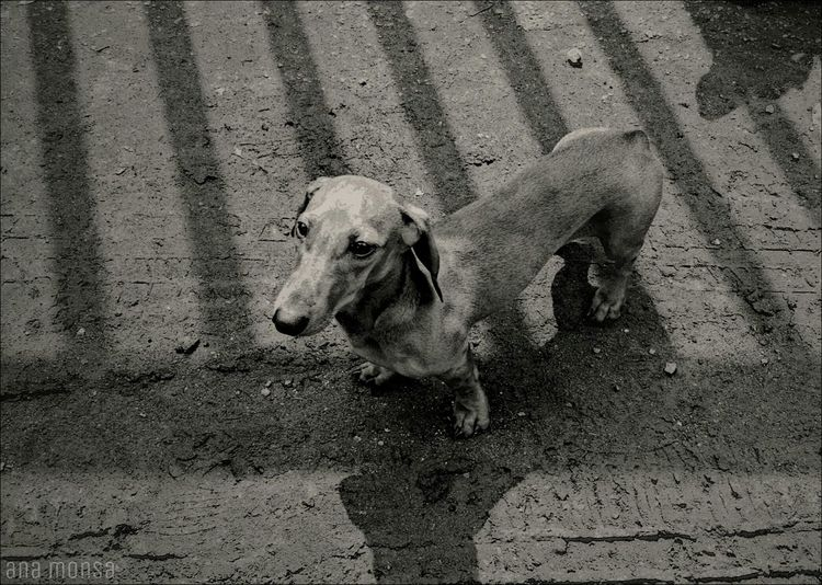 Amigos de la calle Photography Edition Animales Street Black & White Blanco & Negro