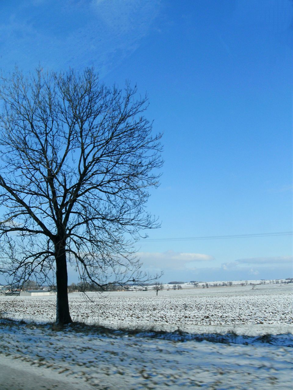 bare tree, blue, tree, tranquility, lone, beauty in nature, remote, branch, tranquil scene, winter, clear sky, nature, landscape, scenics, sky, outdoors, cold temperature, day, no people
