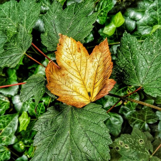 Earliest Autumnal August