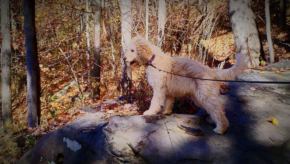 Guard Duty Golden Doodle Mountain Top Lookout The Great Outdoors - 2016 EyeEm Awards Pet Portraits Lost In The Landscape