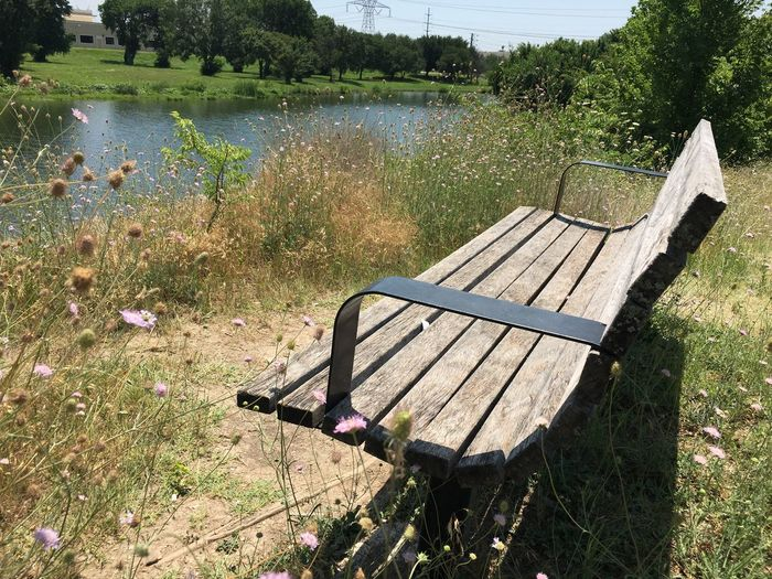 Park bench on water Sunlight Nature Plant Shadow Day Bench No People Seat Tree Tranquility Growth Beauty In Nature Park Bench Relaxation