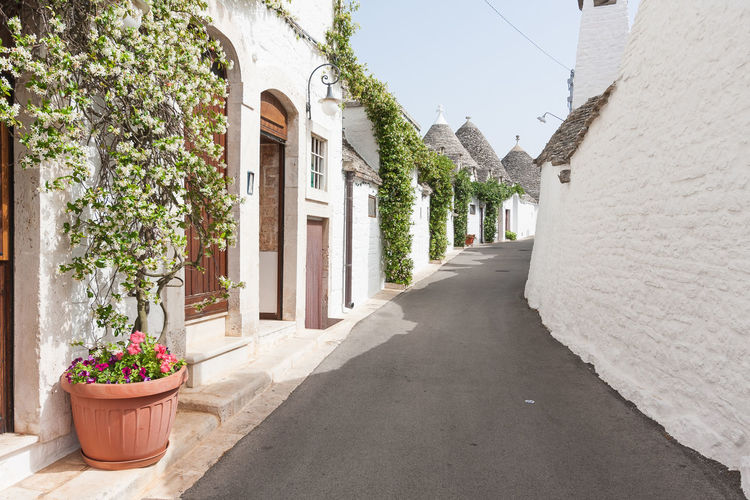 Alberobello... EyeEmNewHere Road Architecture Country House Countryside Flower No People Outdoors Potted Plant Street Trulli EyeEm Selects The Week On EyeEm Fresh on Market 2017 Italy 🇮🇹 Storic Adventures In The City Streetwise Photography
