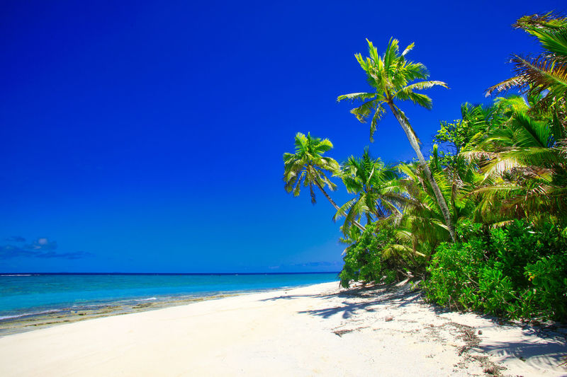 Tropical Island with a paradise beach and palm trees, Fiji Islands Beach Tropical Island Palms Fiji Day Daylight Daytime During Exterior Exteriors Island Islands Levu Lined Nobody Oceania Oceanica Outdoor Pacific Palm Palm-lined Photo Photos Sandy Shot Shots South Strand Strands The Tree Trees Traumstrand Fidschi Fidschi-Islands Fiji-Islands Holidays Vacation Relax Relaxing Dream Dream Beach Caribbean Caribic  Sea Water Sky Land Tropical Climate Scenics - Nature Beauty In Nature Blue Horizon Over Water Tranquil Scene Tranquility Horizon Palm Tree Plant Nature Sand No People Outdoors Coconut Palm Tree Turquoise Colored