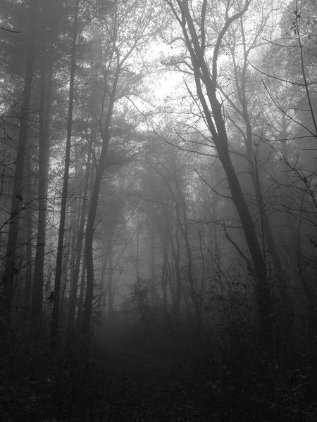 Nature First Eyeem Photo Friday 13th Fog In The Trees