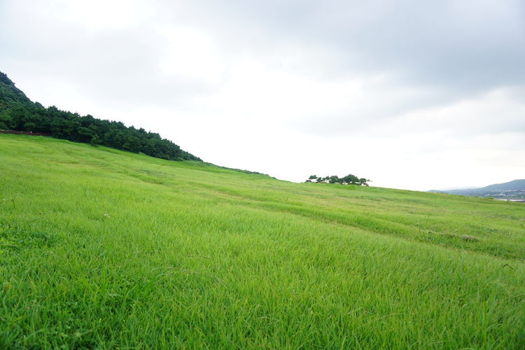 Nature Field Landscape Beauty In Nature Green Color Hill Outdoors No People Tranquility Tranquil Scene Sky Scenics Grass No Filter Green Green Meadow