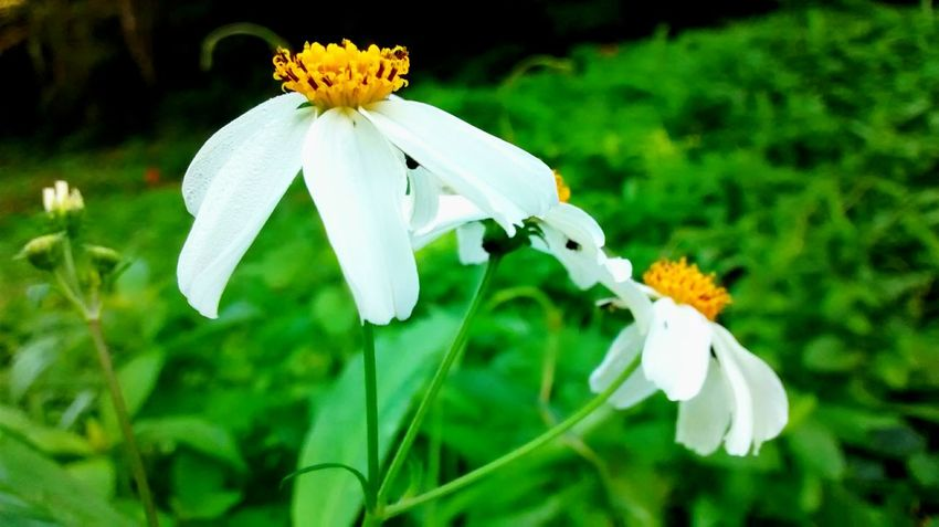Naturaly & Perfect Flowers, Nature And Beauty Photography Class
