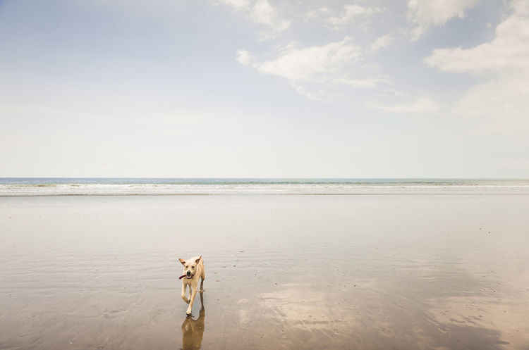 Beach Beauty In Nature Coastal Feature Costa Rica Day Dog On Beach Free Fun Times Happy Times Horizon Over Water Landscape Minimilistic Nature No People Outdoors Running Dog Sand Scenics Sea Sky Tranquil Scene Tranquility Travel Destinations Vacations Water
