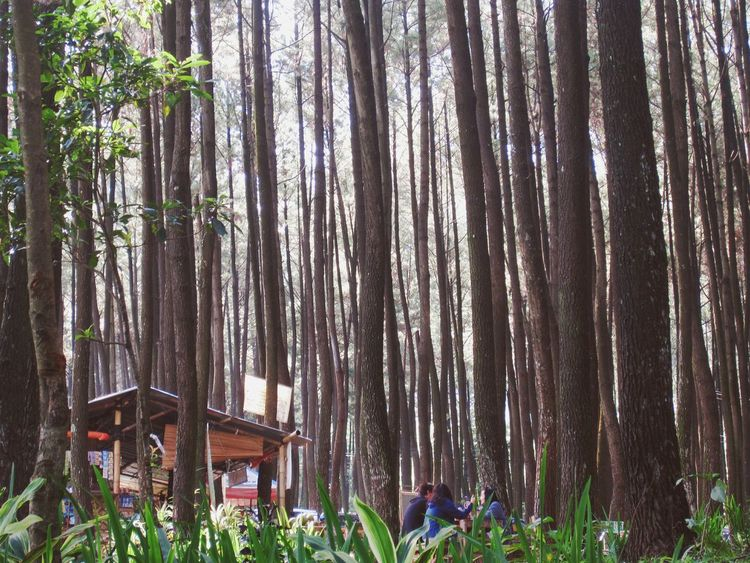 Finding New Frontiers having Breakfast at Pine Forest Nature Outdoors Trying New Things Adventure Pine Trees Exploration Fresh On Eyeem  ExploreEverything Exploring New Ground Exploreindonesia at Gunung Pancar Bogor, Indonesia