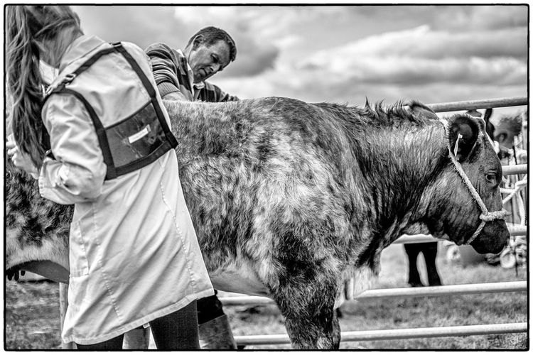Agricultural show in Swinford, Ireland. August 2017 Blackandwhite Livestock Ireland Agriculture Mammal Domestic Animals Horse Livestock Real People One Animal One Person